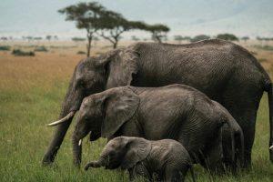 """Muere Daphne Sheldrick, la célebre """"madre"""" de los elefantes huérfanos - d8f4c3b533835e31e7a9d6b6b203d1210bf98785-300x200"""