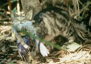 Tasa de extinción de mamíferos en Australia podría empeorar - e497c4c49b3cec1b4739372b5bbd23579945e9fb-300x213