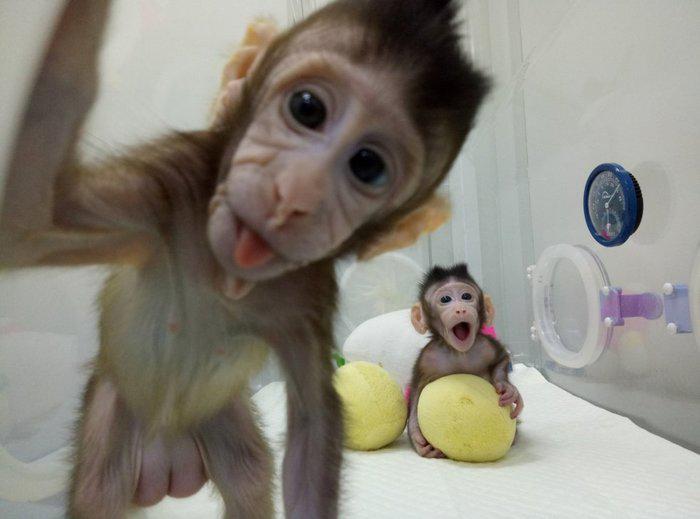 Las mejores 5 fotos de animales del 2018 - bfd0c623b53149c09a036618a347e40c