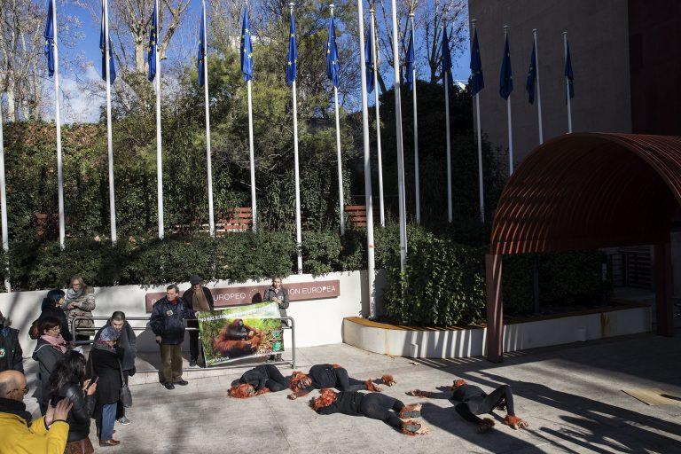 Ecologistas piden a la Unión Europea excluir al biodiésel de palma por destrucción de biodiversidad - BiodiéselFoto4-768x512