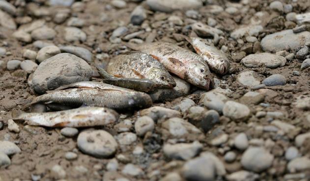 Indígenas llaman a defender el río Cauca - riocauca-colprensa_0