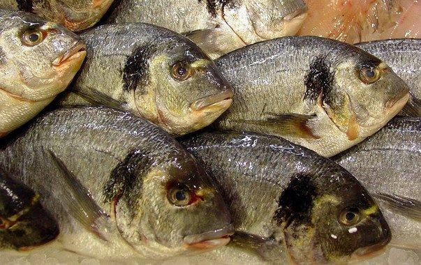 Los peces acumulan antidepresivos, antibióticos y componentes de cremas solares - Los-peces-acumulan-antidepresivos-antibioticos-y-componentes-de-cremas-solares_image_380