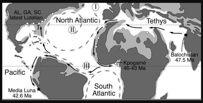La ballena que viajó a cuatro patas hasta llegar al Pacífico - Sin-título