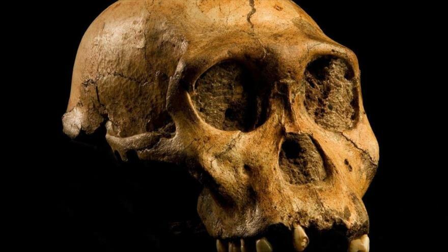 Homínido que vivió hace 2 millones de años no fue origen de hombre - 08080119_xl