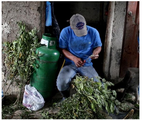 En Popayán se discutirá política de drogas el 31 de mayo - Sin-título