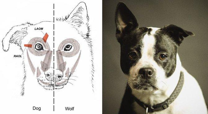 Por qué tu perro te pone ojitos: así se comunica mejor contigo - Montaje_image671_405