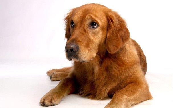 Por qué tu perro te pone ojitos: así se comunica mejor contigo - Por-que-tu-perro-te-pone-ojitos-asi-se-comunica-mejor-contigo_image_380