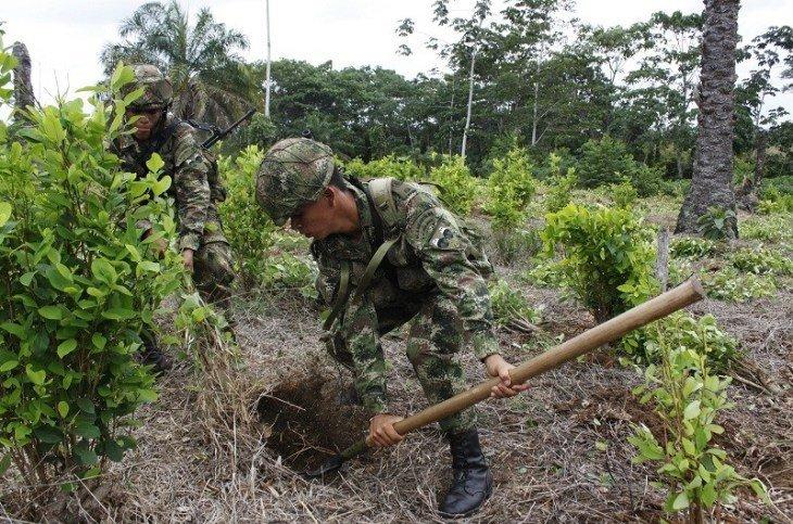 Actuaciones irregulares de la Fuerza Pública en territorios del Pueblo Nasa de Putumayo - erradicacion_0-1