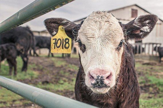La ONU pide reducir el consumo de carne para frenar el cambio climático - La-ONU-pide-reducir-el-consumo-de-carne-para-frenar-el-cambio-climatico_image_380