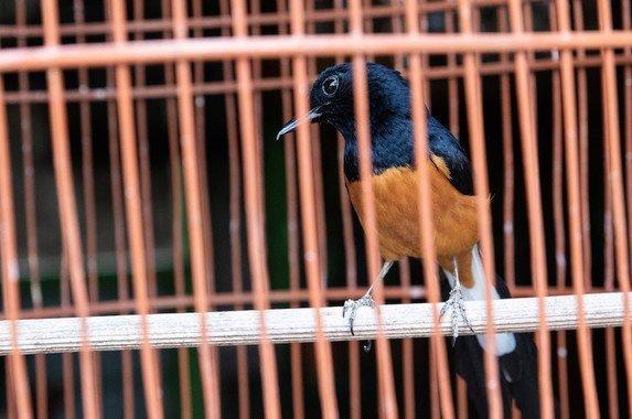 CIENCIAS NATURALES: Ciencias de la Vida  Una de cada cinco especies de vertebrados silvestres se comercializa en el mercado global - Una-de-cada-cinco-especies-de-vertebrados-silvestres-se-comercializa-en-el-mercado-global_image_380