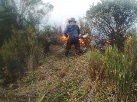 La campesinada de Sumapaz salva el páramo de incendio - 84883792_1106512279723402_2985215112119320576_n