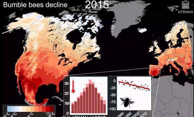 Los abejorros se extinguen al ritmo de la crisis climática - Declive-de-los-abejorros_image671_405
