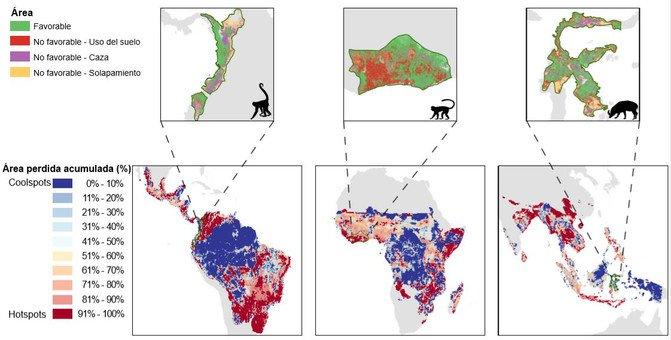 La caza y el uso del suelo reducen a la mitad la distribución de los grandes mamíferos tropicales - Distribucion_image671_405