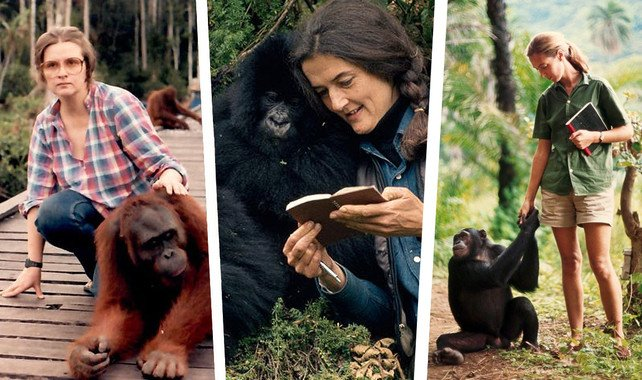 Biruté Galdikas, Jane Goodall y Dian Fossey. / SINC