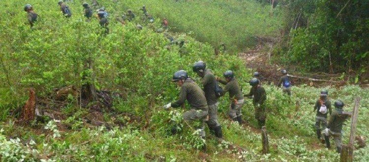 Ocupación militar violenta la autonomía en cabildo Nasa Kwesx Kiwe, Puerto Asís - actualidad-mininter-pnp-erradico-5330-hectareas-hoja-coca-ilegal-tres-regiones-n315844-764x480-454750
