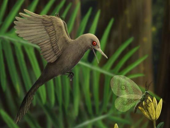 Descubierto en ámbar el dinosaurio más pequeño del mundo, similar a un colibrí - Nueva-especie-de-dinosaurio-diminuto-1
