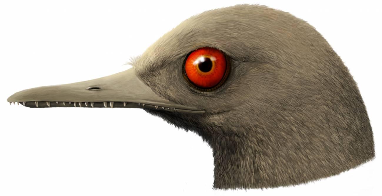 Descubierto en ámbar el dinosaurio más pequeño del mundo, similar a un colibrí - Nueva-especie-de-dinosaurio-diminuto