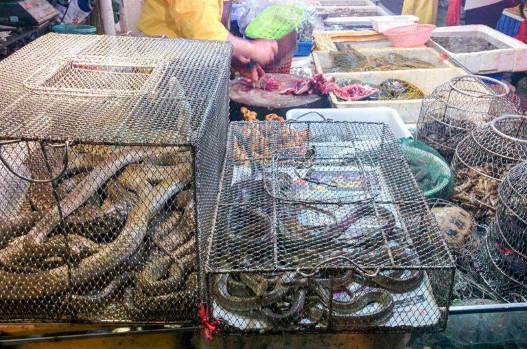 Animales comercializados en los típicos mercados húmedos asiáticos. / ©Adobe Stock