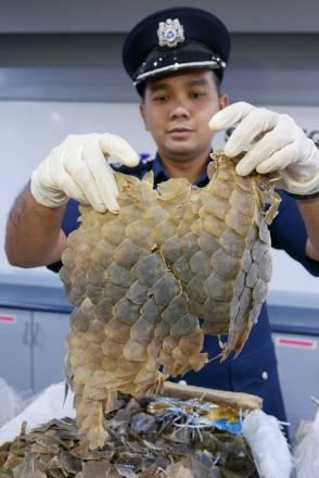 El tráfico ilegal de animales salvajes, una bomba sanitaria que ha estallado con el coronavirus - Escamas-de-pangolin
