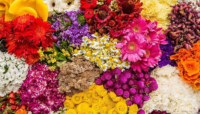 Detrás de cada flor en una vitrina o en un mercado - nota_colombia_700x400