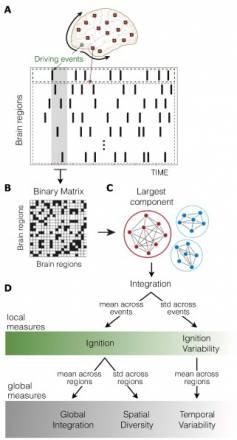 La organización funcional del cerebro se ralentiza tras la ruptura de una relación - Calculo-de-medidas-de-complejidad-dinamica