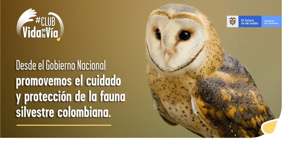 Gobierno nacional invita a los colombianos a hacer parte del #ClubDeVidaEnLaVía, iniciativa para prevenir el atropellamiento de fauna silvestre - VidaEnLaVia-1