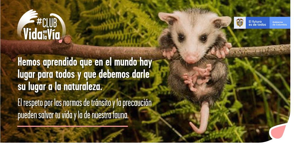 Gobierno nacional invita a los colombianos a hacer parte del #ClubDeVidaEnLaVía, iniciativa para prevenir el atropellamiento de fauna silvestre - VidaEnLaVia-13