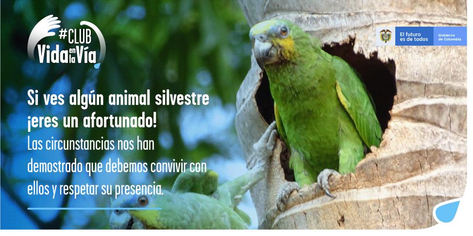 Gobierno nacional invita a los colombianos a hacer parte del #ClubDeVidaEnLaVía, iniciativa para prevenir el atropellamiento de fauna silvestre - VidaEnLaVia-2