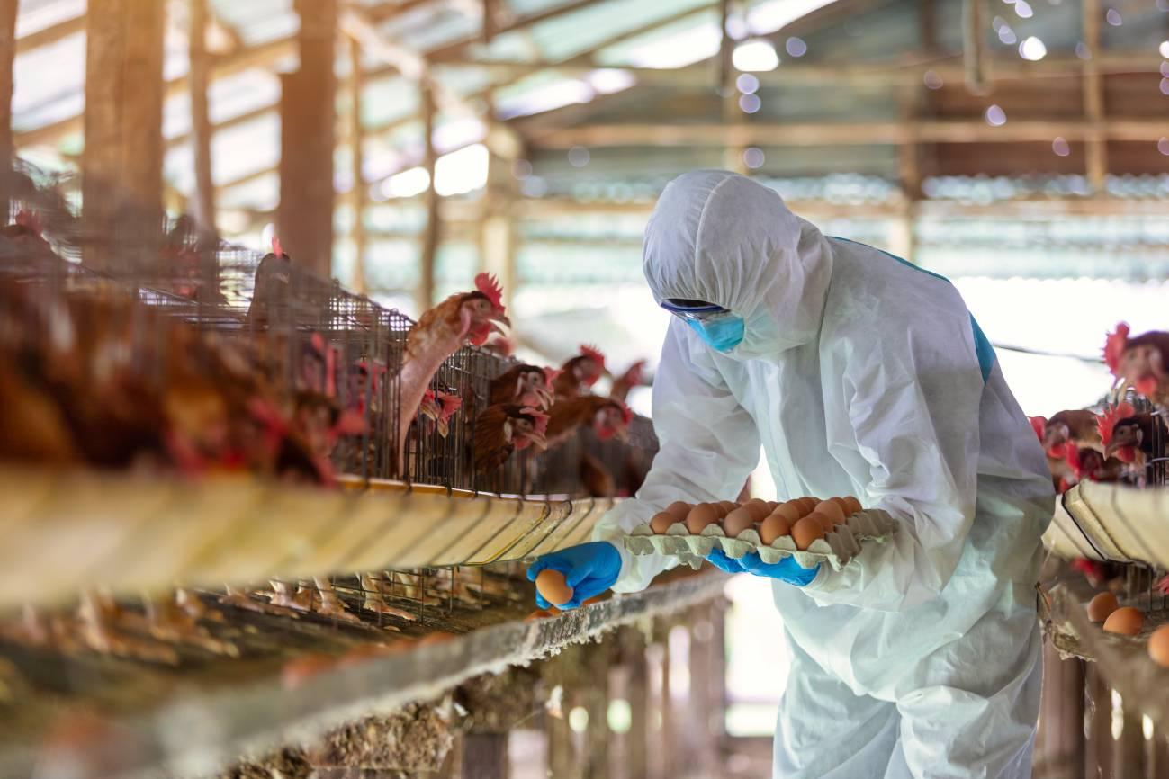 En granjas y explotaciones de animales es donde se han concentrado un número mayor de brotes. / Adobe Stock