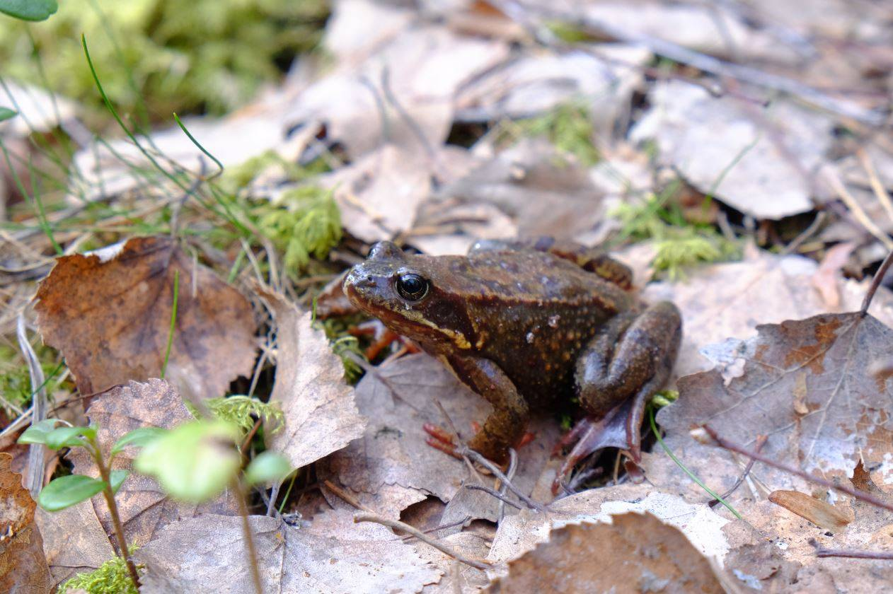 La crisis climática envejece a peces, anfibios y reptiles - Frog