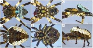 Las-montanas-colombianas-revelan-una-nueva-especie-de-arana-a-3.500-metros-de-altitud - Las-montanas-colombianas-revelan-una-nueva-especie-de-arana-a-3.500-metros-de-altitud-300x156