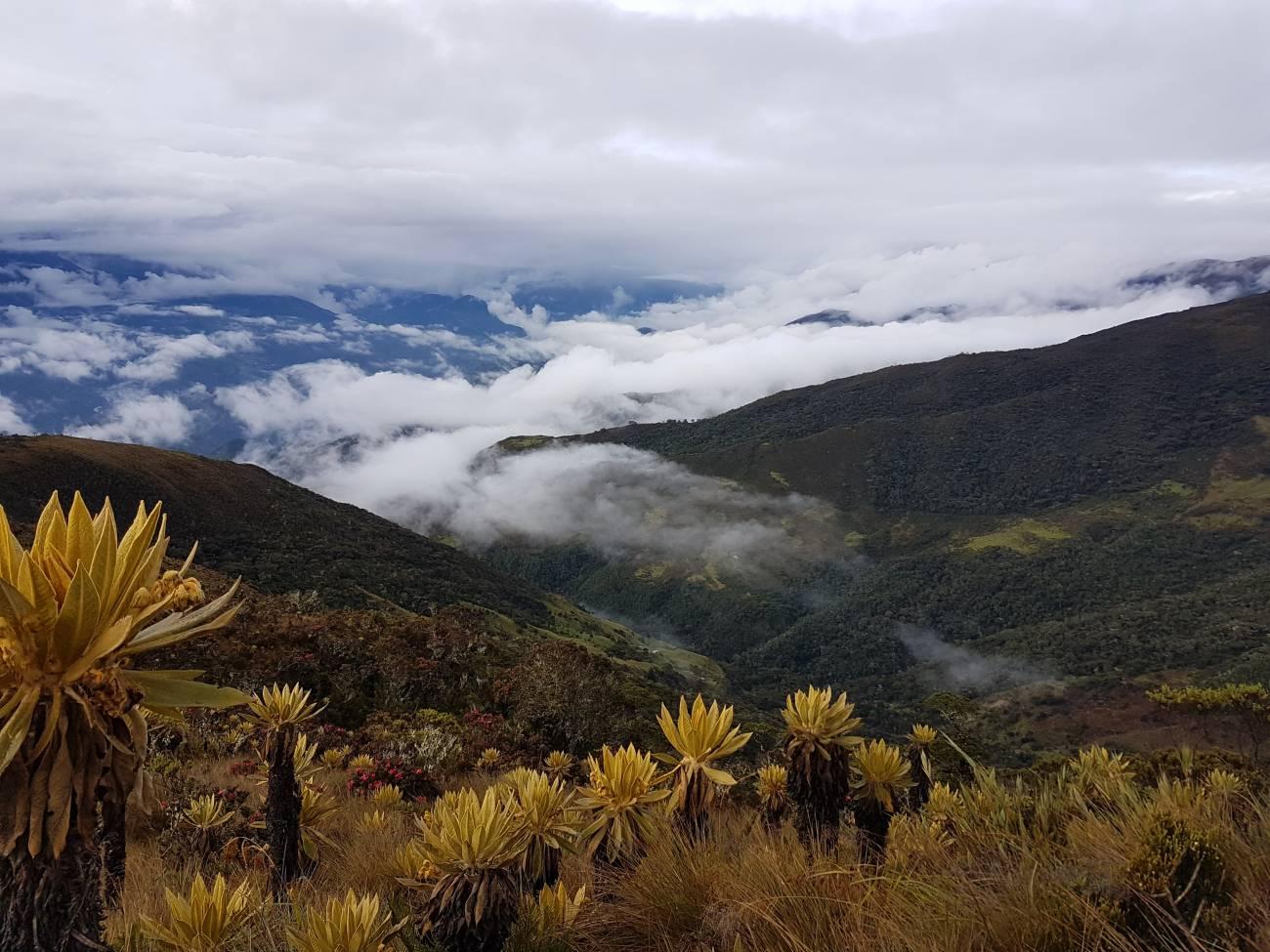 Las montañas colombianas revelan una nueva especie de araña a 3.500 metros de altitud - Montanas