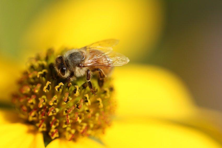 ¿Polinizadores humanos o abejas robots? - AdobeStock_293724789