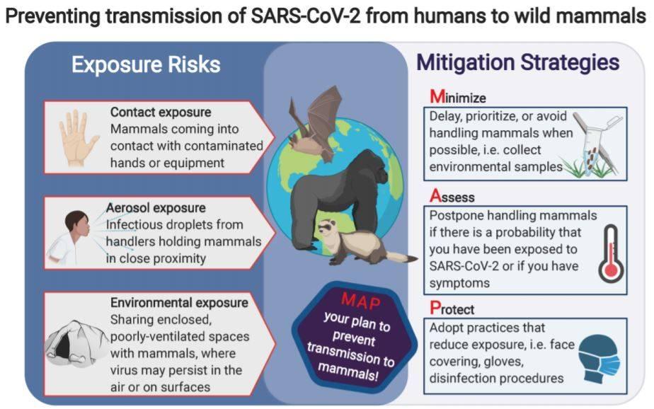 ¿Y si los animales salvajes se contagiaran de coronavirus? - Recomendaciones