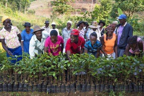 """Árboles """"digitales"""" para luchar contra el cambio climático y lograr el desarrollo sostenible - Treedom-465x310-1"""