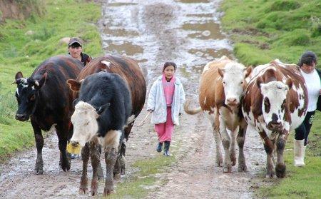 Falla tutela a favor de constitución de zonas de reserva campesina - suma_3