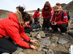 La vida vegetal se abre paso en la Antártida más inhóspita - 8012182660001-300x224