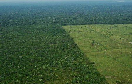 Campesinos y deforestación en el norte Amazónico - amazon-rainforest-deforestation