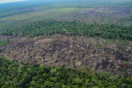 Campesinos y deforestación en el norte Amazónico - cuadro-a1-768x512-1