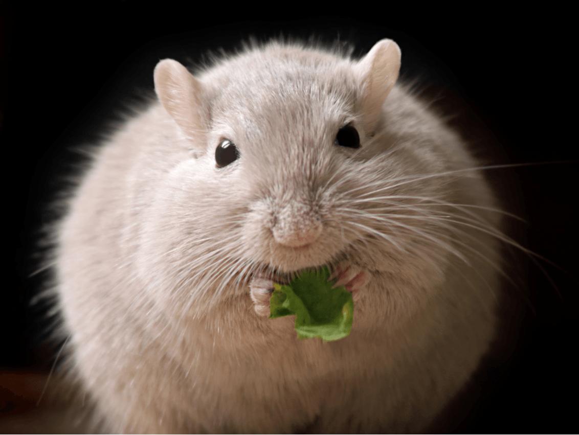 Un fármaco ya en uso en humanos corrige la obesidad en ratones sin efectos secundarios - Un-farmaco-ya-en-uso-en-humanos-corrige-la-obesidad-en-ratones-sin-efectos-secundarios