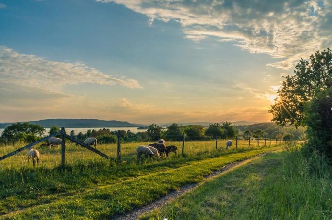 El gobierno abre nuevos créditos con bajas tasas de interés para el sector agropecuario - campoc