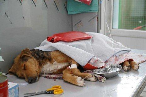 El maltrato animal, entre la falta de empatía y los trastornos sicólogicos - Maltrato-Animal-465x310-1